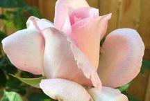Gardening,Flowers,çiçekler