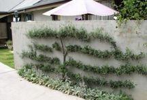 Perma Garden #One