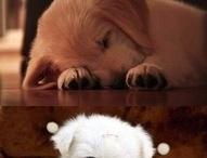 ~Cute~