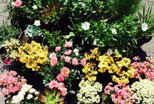 design   plants & flowers / Flowers, plants, cactus, suculents