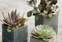 Garden / by Jenny Vanderhill