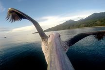 X-Wear / GoPro Videos / Amazing videos shot with GoPro Cameras