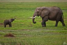 Elephants / by Kimberley =^..^=