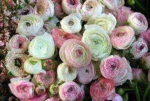 {flowers + gardening}