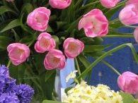 Wiosna Justyna  / Wiosenne kwiaty budzące się do życia