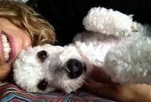 My dog / Brando