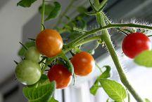 Grow food indoor