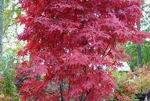 JARdin plantation arbre