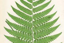 Botanical Ideas