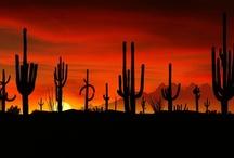 I <3 Arizona / by Ashley Whipple