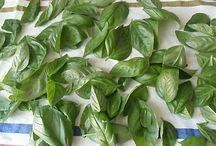 conservare verdure e cibi