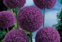 Fabuleuses plantes