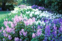 A Cape Garden