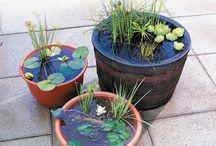 Garden - container pond