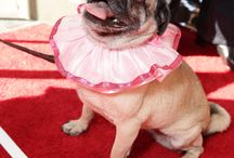 Rrruffler on the Rrred Carpet / We dress Hollywood canines!