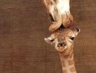 Giraffes! / by Angie Runnels