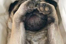 Cachooorroos / animales hermosos y tiernos cachorros