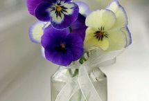 Violets / by GentleDecisions