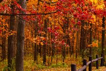 Seasons come and go / my fascination with the changing of seasons