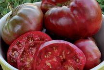 Heirloom, Fruit & Vegetable Plants / by Sandy Hilliard