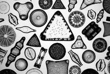 深海と微生物