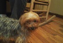 rosy my dog