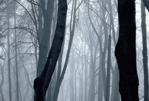Inspiration- Trees and Open Spaces