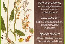 Pflanzen Wirkstoffe
