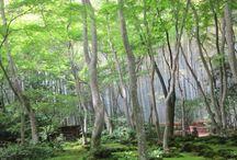 Moss gardens, les jardins moussus