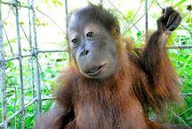 Genetik Farklarıyla Öne Çıkan Down Sendromuna Sahip Sevimli Hayvanlar
