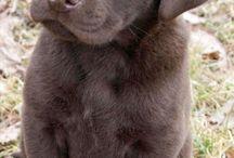 Bentley's vriendjes / Onze baby puppy