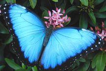 Birds Blooms and Butterflies