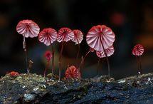 fungi/gomba