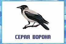 картинки птицы животные
