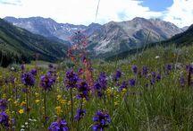 Colorado / by Jodi Armendariz