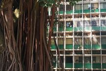 Pintagrams Ficus modernista - Brasilia https://scontent.cdninstagram.com/t51.2885-15/sh0.08/e35/20688489_113933729267705_3409339404567707648_n.jpg