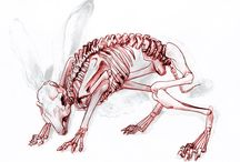 other animal anatomy