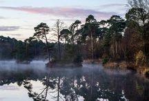 Oisterwijkse bossen en vennen / Mooi natuurgebied. Sinds 1913 al beschermd