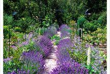 El jardín de las hadas!!!