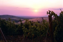 Belguardo Winery / Owned by Marchesi Mazzei in Maremma Toscana.