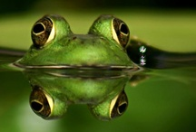 frogs / by Jami Hollingsworth