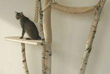 cats junglegyms
