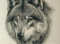 Lobos Magestuosos