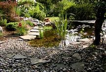 The Future Fish Pond