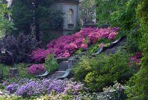 Garden inspiration / by Robin Bianchini