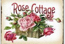 romantika - rózsák