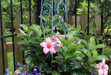 Yard - container gardening