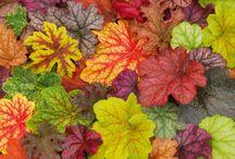 Farbinspirationen /  Farbkonzepte aus der Natur - Inspirationen
