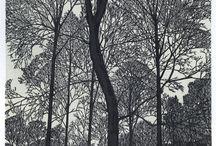 Trees / tall, small, windblown, sundried