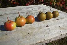 Green Barn Fruit